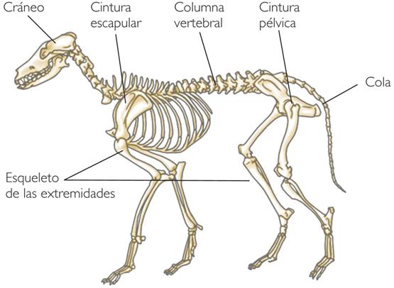 Animales vertebrado y sus partes - Imagui
